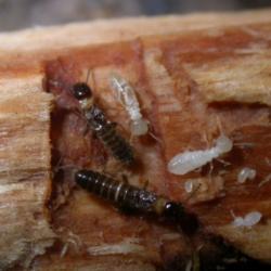 termites, moisture control, vapor barrier, crawl space, crawl space door systems, encapsulation